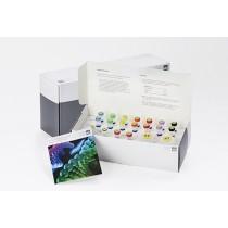 E. coli vtx1 and vtx2 Subtyping PCR Kit