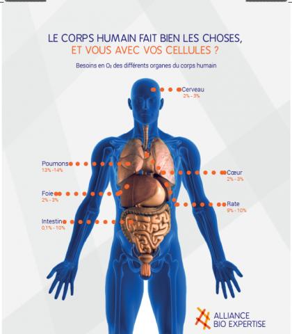hypoxie-corp-humain